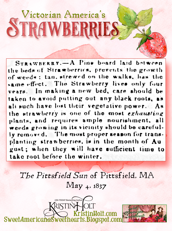 Kristin Holt | Victorian America's Strawberries. Tips for growing strawberries, from The Pittsfield Sun of Pittsfield, Massachusetts, May 4, 1837.