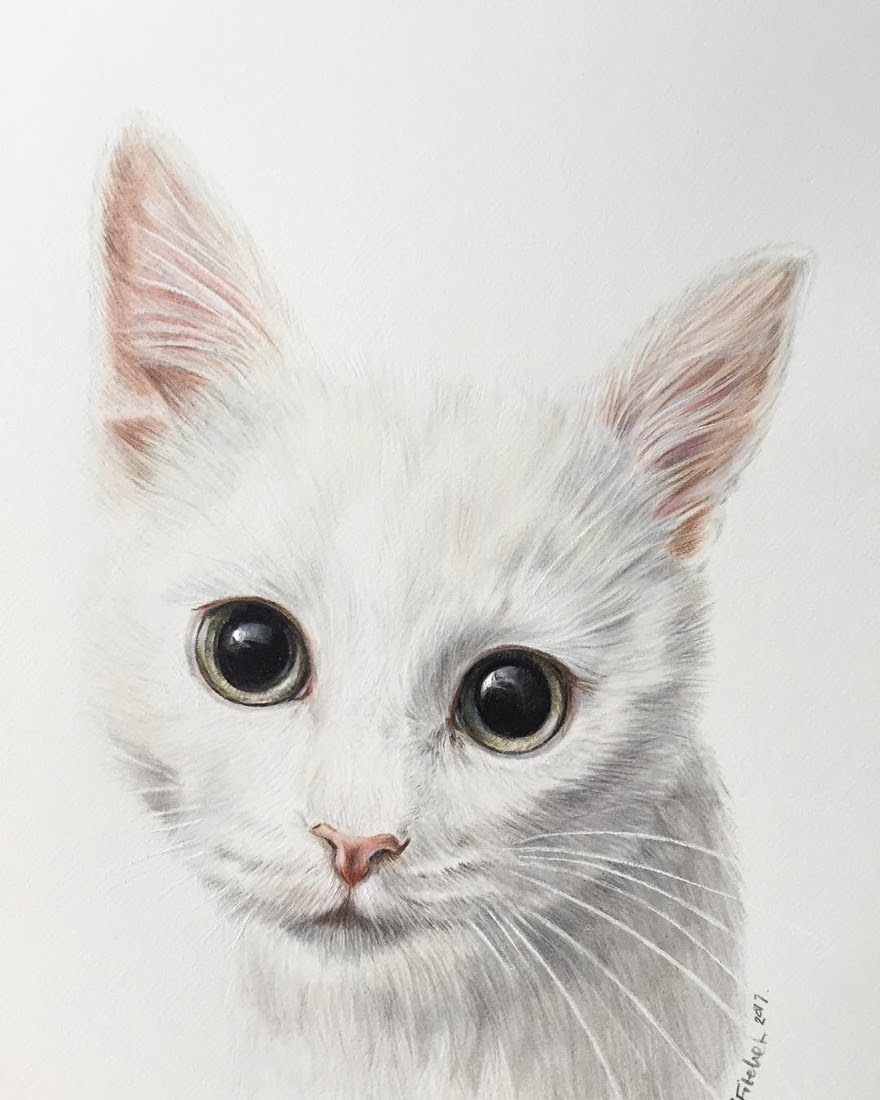 01-White-kitten-Zoe-Fitchet-Pet-Portraits-Cats-and-Dogs-Drawings-www-designstack-co