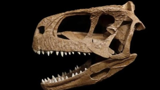 Pesquisadores encontraram um crânio de um dinossauro carnívoro na Patagônia