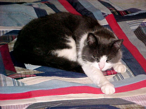 cat on a quilt