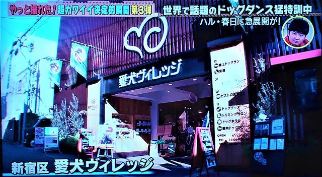 【ロケ利用】テレビ東京「どうぶつピース」に愛犬ヴィ…