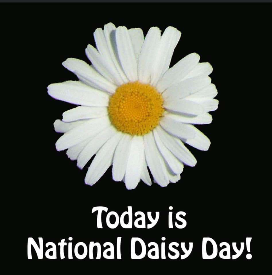 National Daisy Day Wishes For Facebook