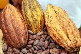 Jobs Opportunities : Finance and Administrative Director - SIC Cacao
