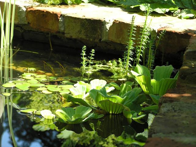 rośliny w oczku wodnym