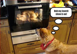 Funny Thanksgiving Dog