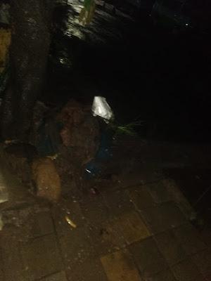 Terjadi Pohon Tumbang Akibat Bekas Galian Salah Satu PDAM di Kota Tangerang