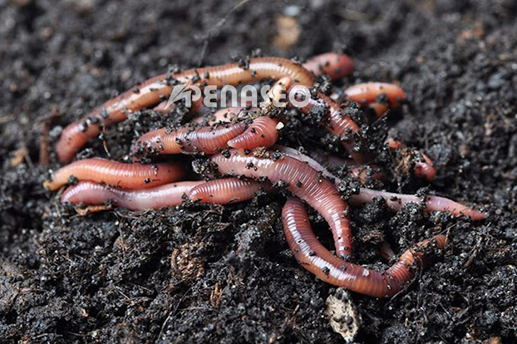 Cara Ternak Cacing Tanah Untuk Pakan yang Menjanjikan