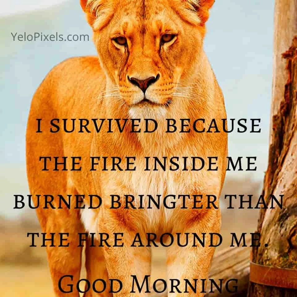 TO-survive-through-out-your-fire-they-you-will-success-in-morning