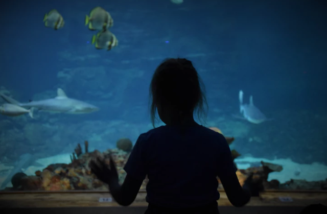 A girl looking into an aquarium tank