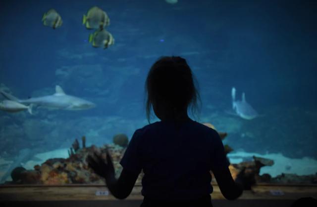A girl looking into an aquarium tank