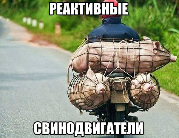 Как перевезти свиней на мотоцикле