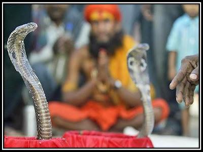 man worshipping snake