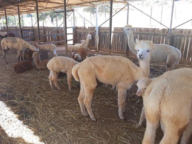 Nursery at Alpaca Loom