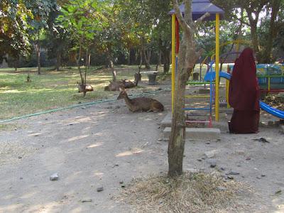 rusa taman balekambang