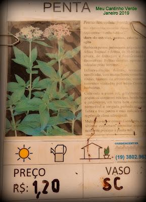 Mudas  PENTAS - ( Pentas lanceolata )