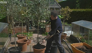 Monty Don Olive Tree