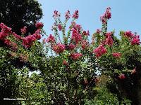 Red flowers - Royal Botanic Gardens, Sydney, Australia