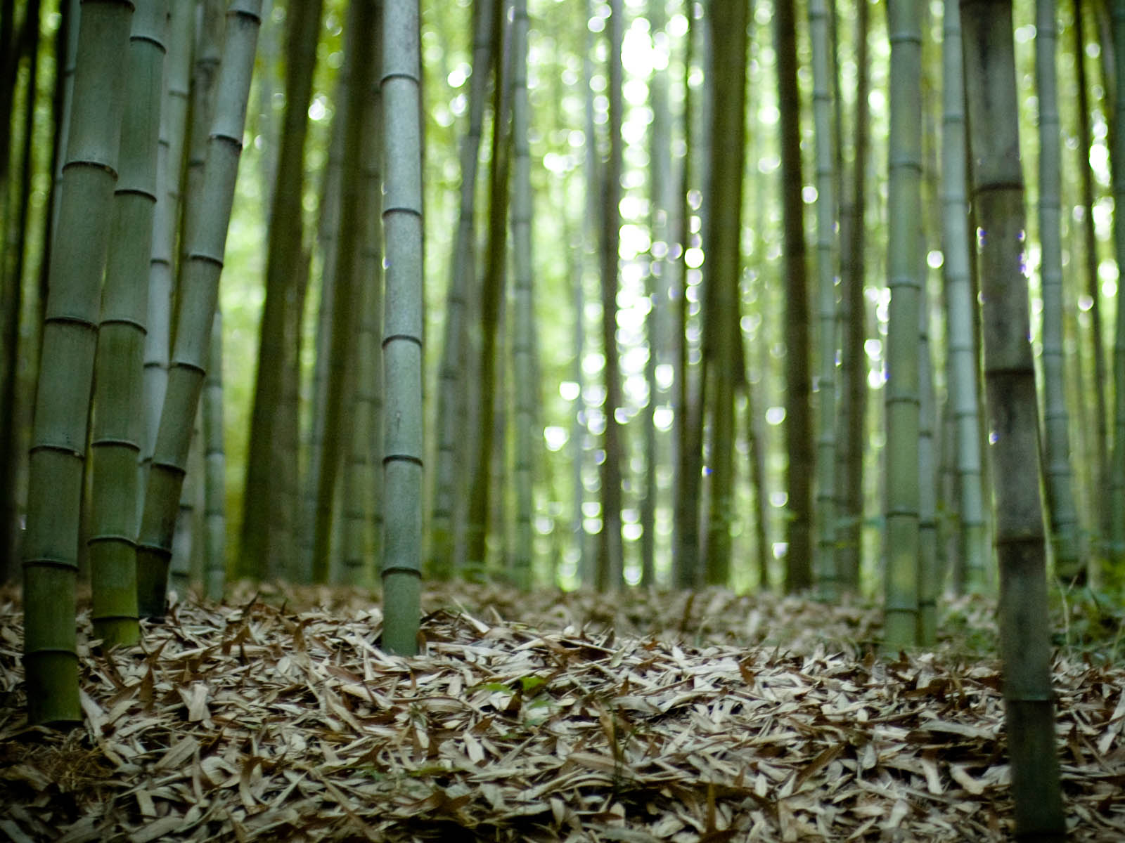 bamboo wallpaper by doantrangnguyen - photo #11