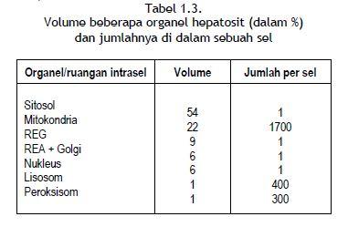 Volume beberapa organel hepatosit