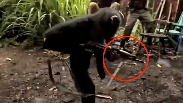majmun sa puskom