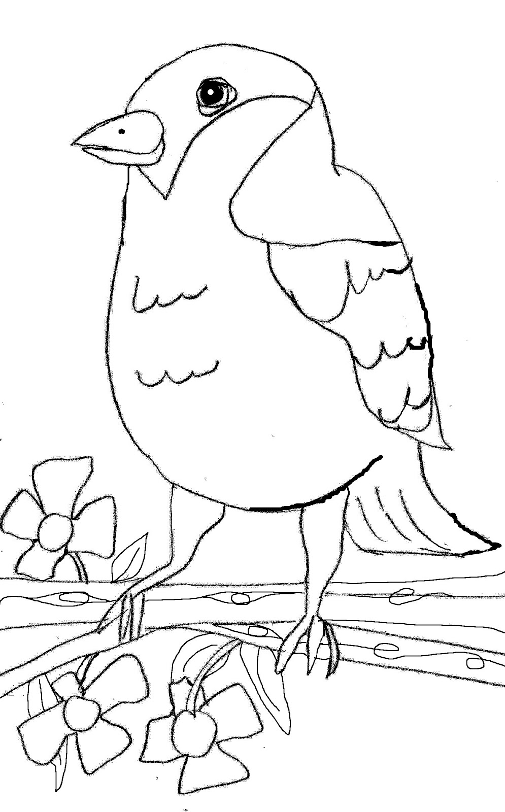 Christian Images In My Treasure Box: Home Drawn Bird in