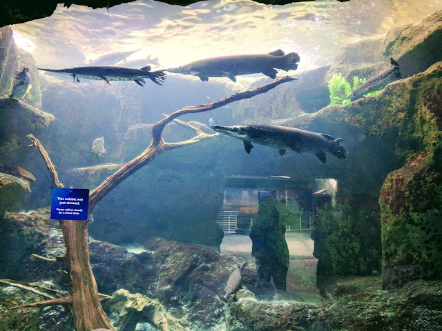 More Vacation Pictures:  The Florida Aquarium --How Did I Get Here? My Amazing Genealogy Journey