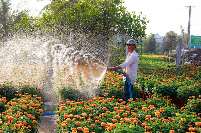 إعلان عن توظيف عون صيانة الحدائق في مؤسسة تسيير خدمات المطارات- المديرية الجهوية للشرق ولاية قسنطينة