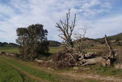 Paisatge amb arbres i un camí (Torà) per Teresa Grau Ros