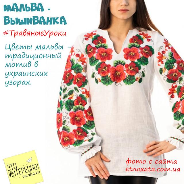 цветы мальвы в украинском искусстве