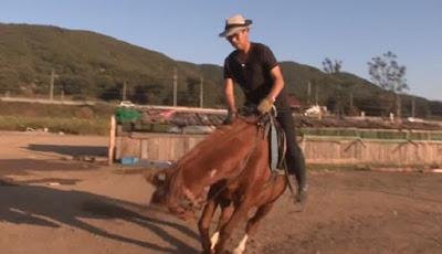 Kuda pemalas pura-pura mati