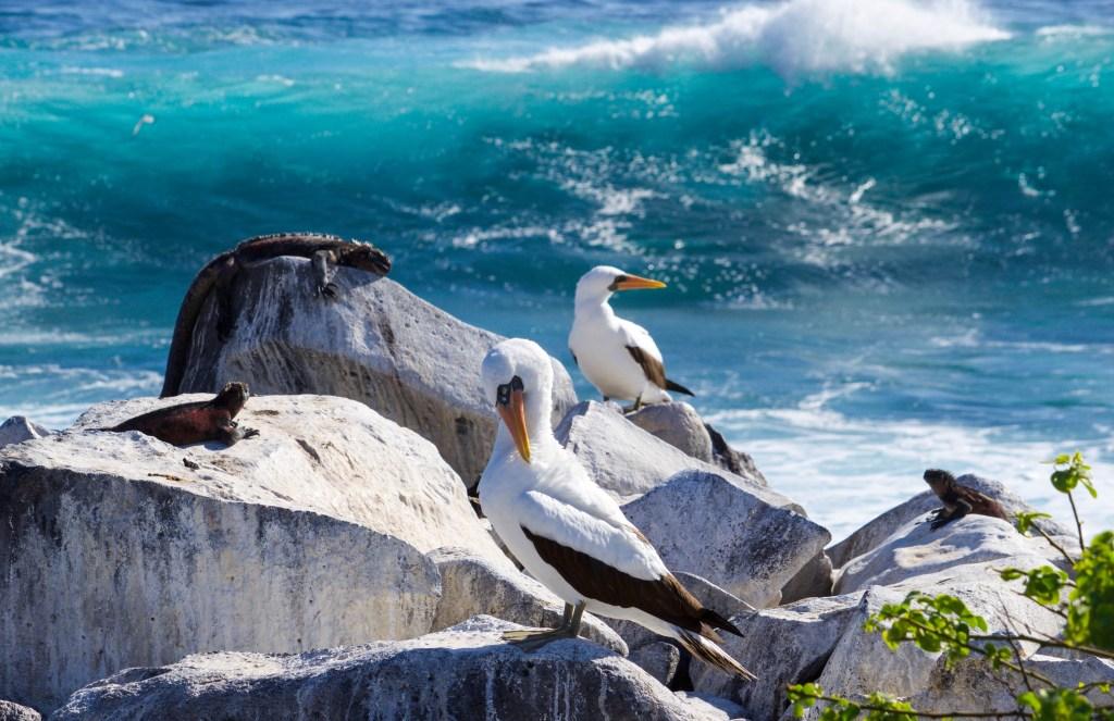 Пунта Суарес на острове Эспаньола, Галапагосские острова