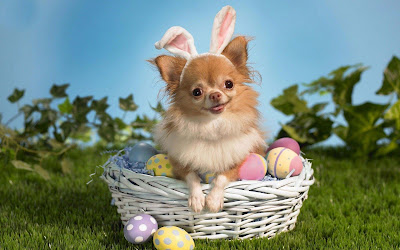 puppy-with-rabbit-ears-pics-nicecollection
