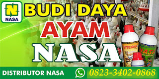 AGEN NASA DI Mutiara Timur Pidie - TELF 082334020868