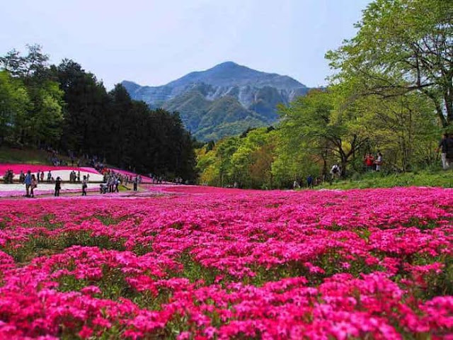 Enjoy the Beauty of the Flower Garden at the Foot of Mount Tomohon, Manado