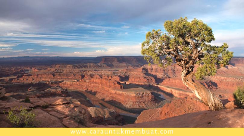 Juniper Tree on Canyonlands 7