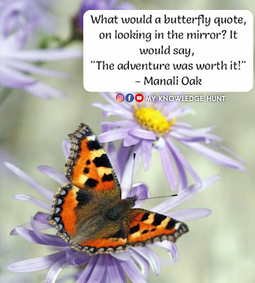 Quotes on Butterfly Soul, Butterfly Quotes For Instagram
