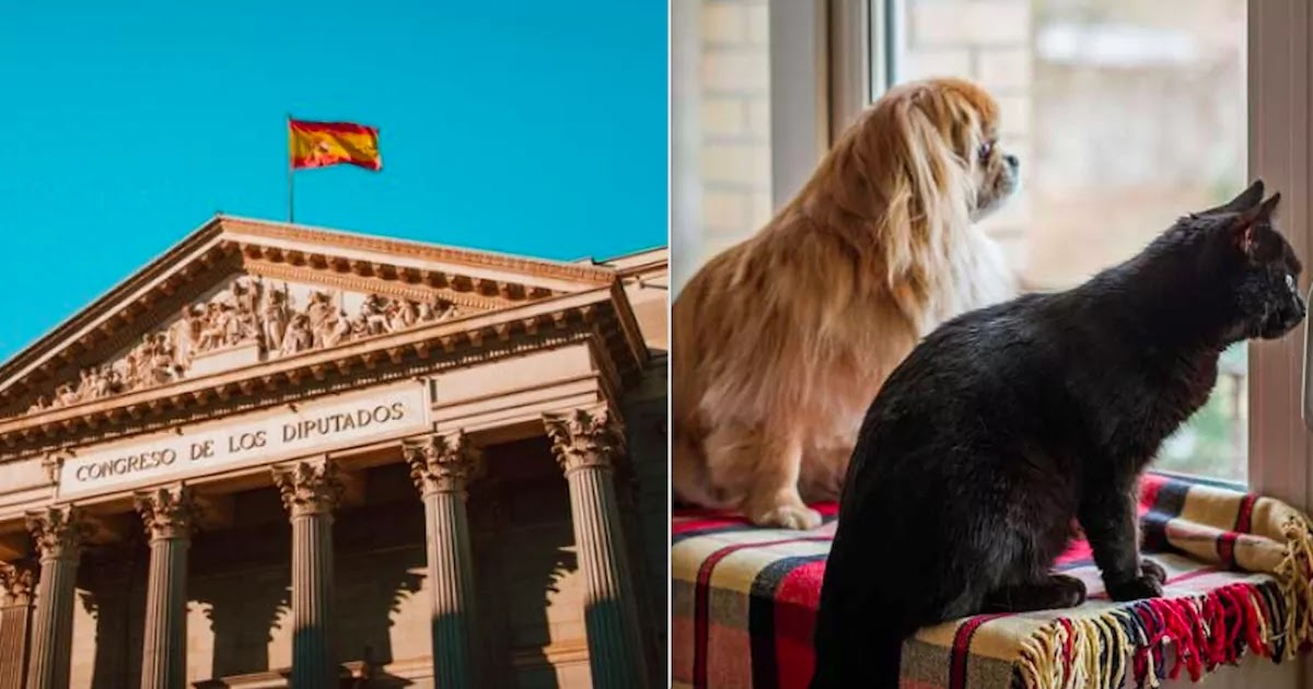 Spain To Update Legal Status Of Pets From 'Property' To 'Sentient Beings'