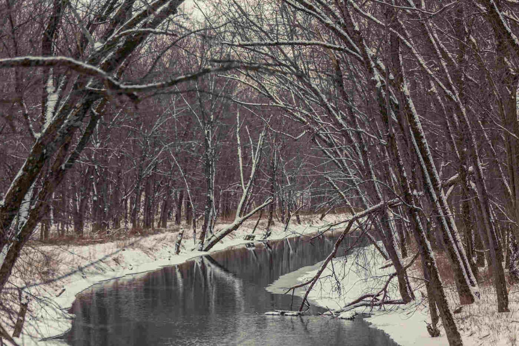 Up the Creek Trail -- Winter