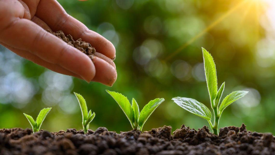 SCI-TECH : La vente de semences paysannes aux jardiniers amateurs autorisée en France