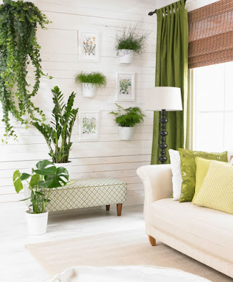 Maintaining and Care of Ornamental Ferns In Room Images