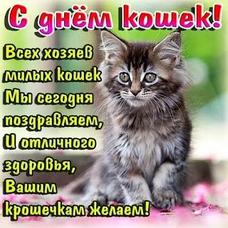 С Днём кошек