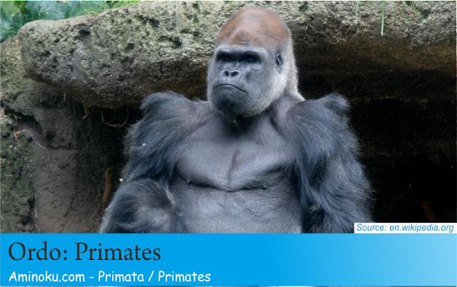 Fakta unik primata