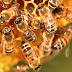 Η κλιματική αλλαγή μειώνει την παραγωγικότητα των μελισσών