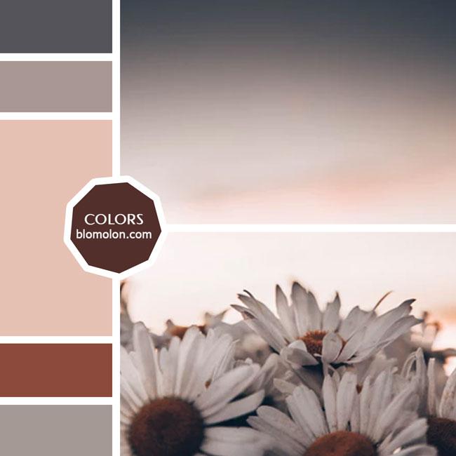 variedad_en_color_moodboard_34