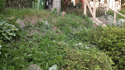 Koreatown Toronto Front Slope Weeding and New Installation Before by Paul Jung Gardening Services--a Toronto Organic Gardening Services Company