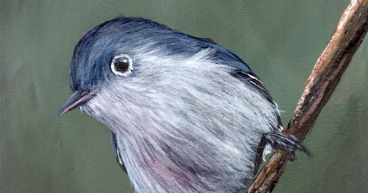 Blue Gray Gnatcatcher in acrylics