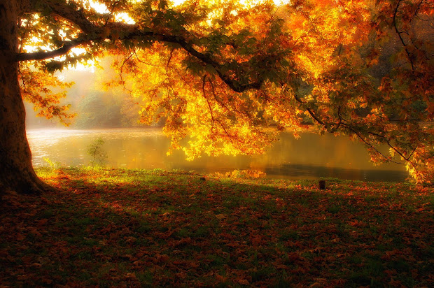 Amazing Fall Landscapes