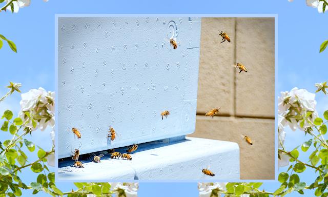 https://miriwords.blogspot.com/2019/06/backyard-beekeeping-week-3-hive.html