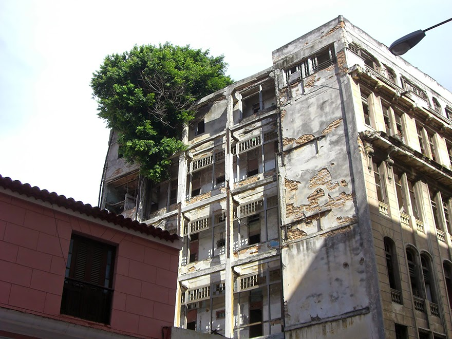 A tree grows right out of this old building, and it's not the only one. It sounds truly strange, but there are a number of buildings around the world that have trees growing out of them. - Life Finds A Way. 25 Plants That Just Won't Give Up