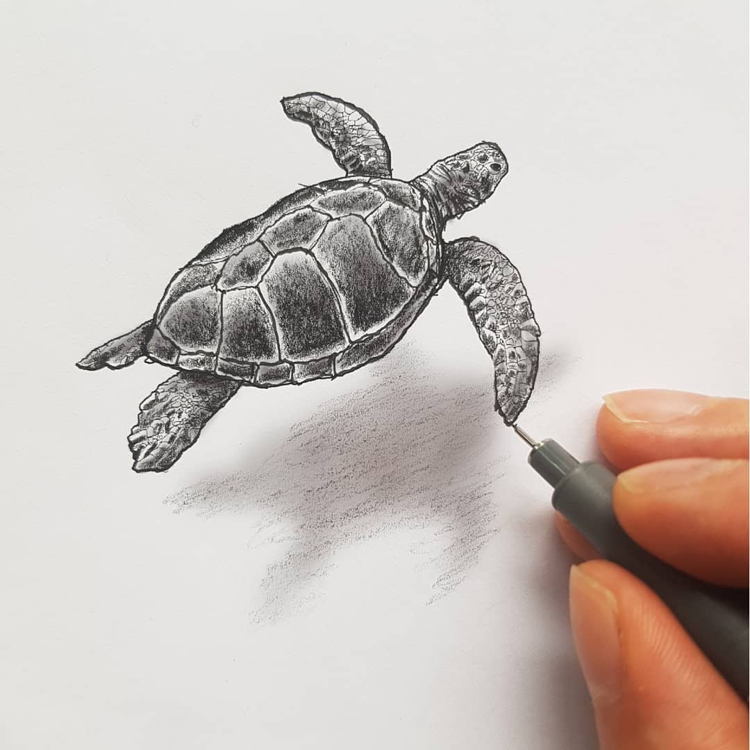 13-Sea-Turtle-Ramon-Bruin-Various-styles-of-3D-drawings-www-designstack-co